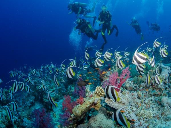http://ancapavel.ro/wp-content/uploads/2017/08/Jackson-Reef-ancapavel.ro_.jpg